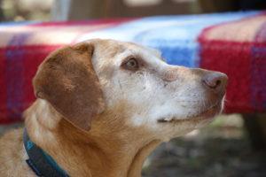 MeinFerienhund - Lucy