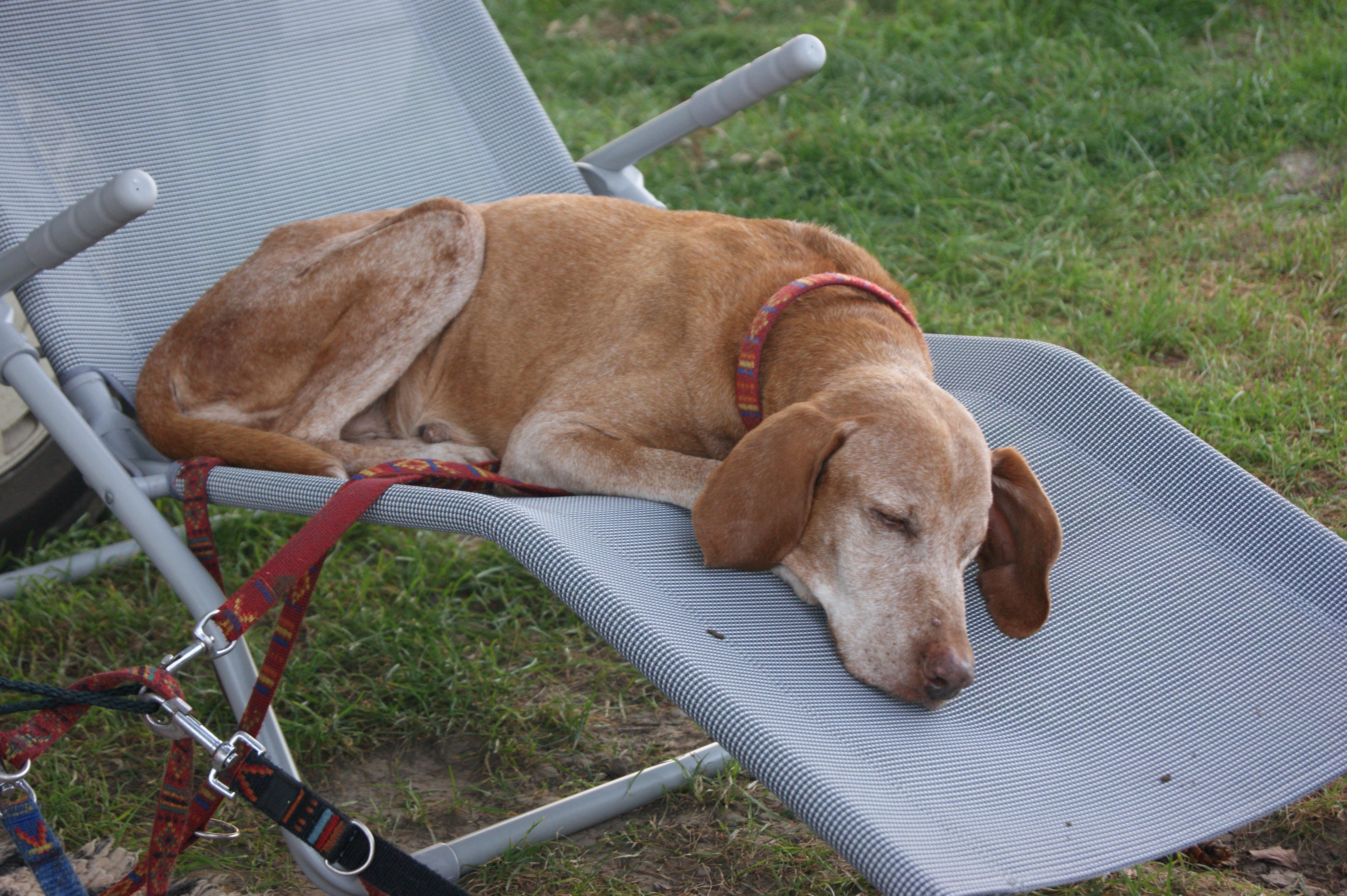 Ferienhund - Barsony Babic