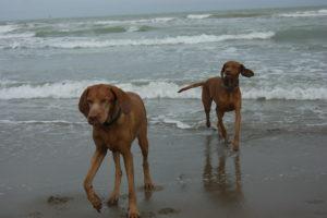 MeinFerienhund - Venedig mit Hund