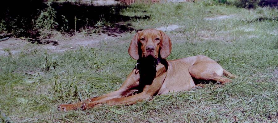 MeinFerienhund - Bàrsony Hajdu