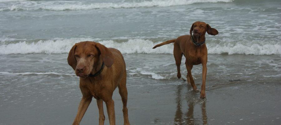 MeinFerienhund - Meieli in der Lagune von Venedig