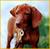 MeinFerienhund-Bewertung