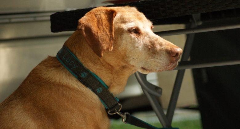 MeinFErienhund - Eine Sonntagsbegegnung