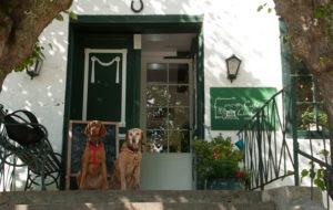 MeinFerienhund - das Landarzthaus