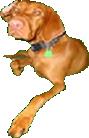 MeinFerienhund -Magyar Vizsla Leany