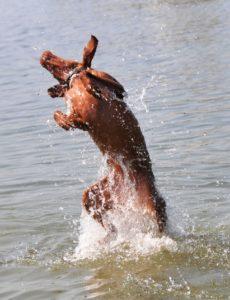 MeinFerienhund - Leany faengt Wasser