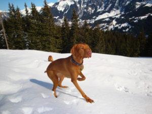 MeinFerienhund - Leany im Schnee
