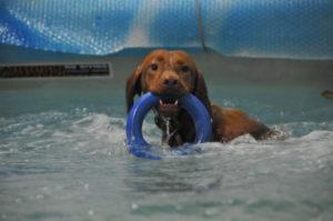 MeinFerienhund - Hundephysiotherapie