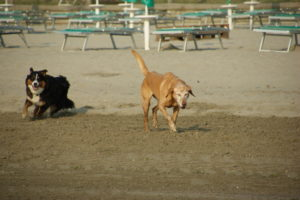 MeinFerienhund - Camping Ancora