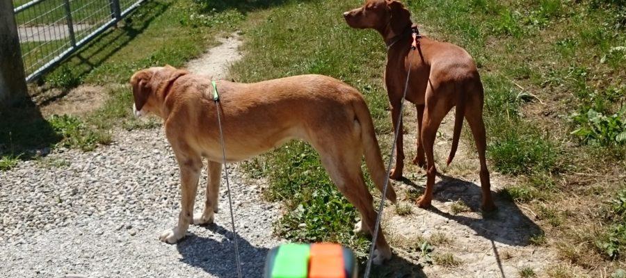 MeinFerienhund - Doppel-Flexi-Leine