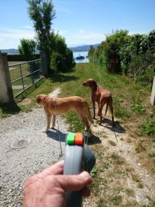 MeinFerienhund - Doppel-Rollleine im Test