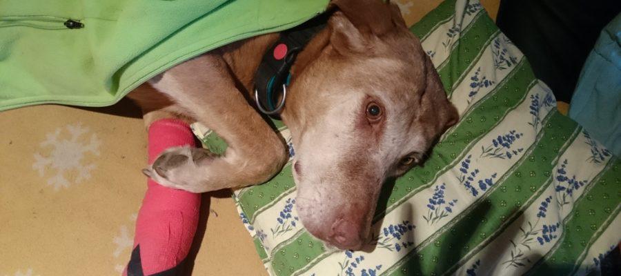 MeinFerienhund - Reiseapotheke