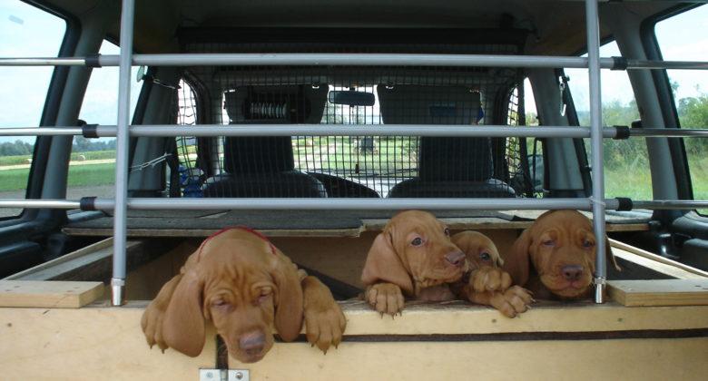 MeinFerienhund - Auto und Hund