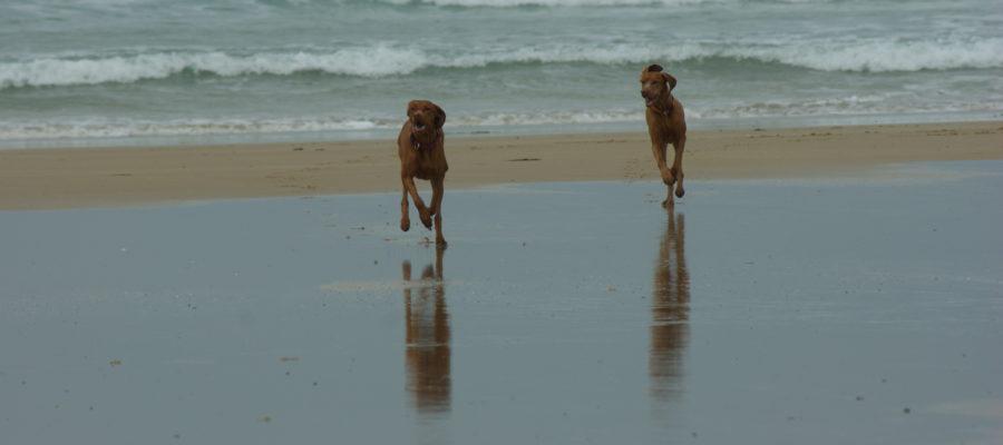 MeinFerienhund - Reisen mit Hund Frankreich
