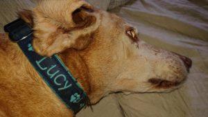 MeinFerienhund.- hunde-halsband