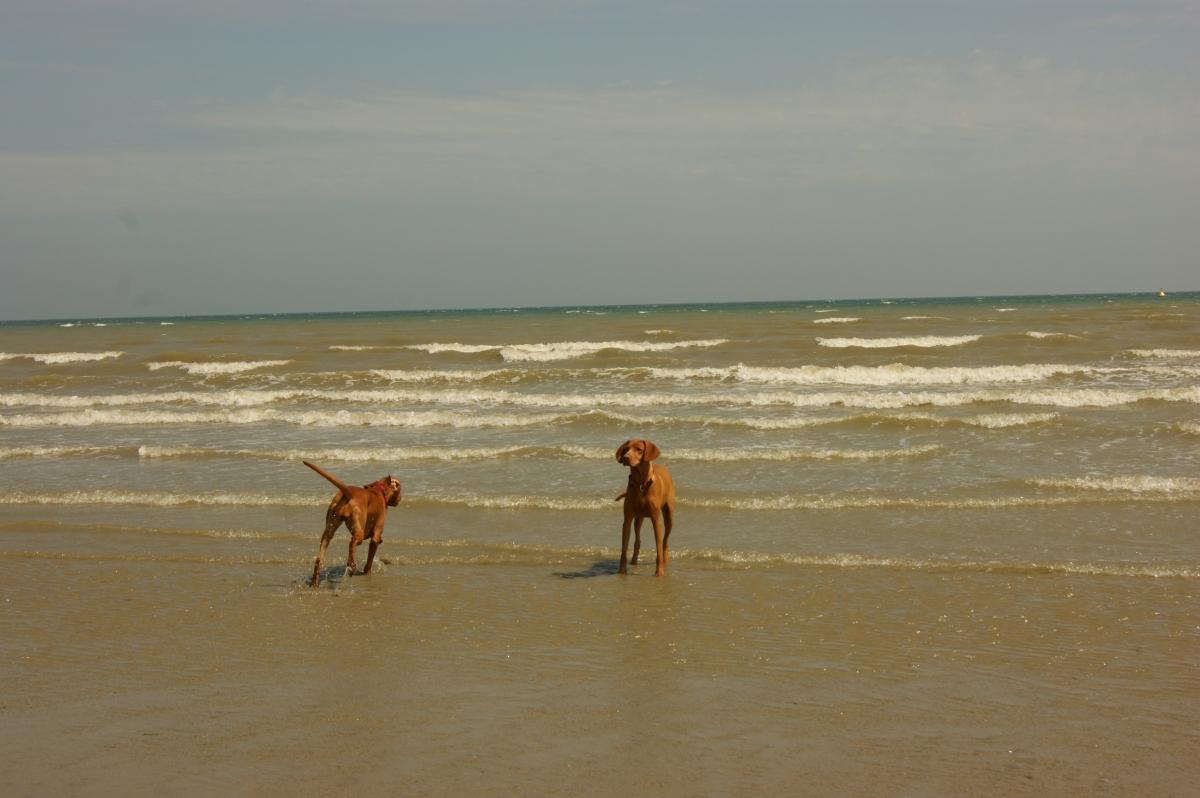 2011 Normandie 2 008