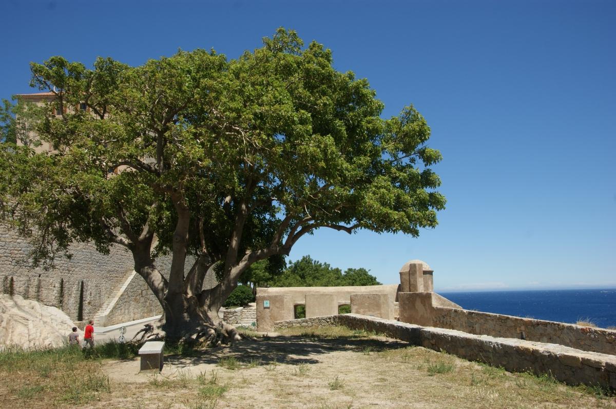 2016 Korsika 0568